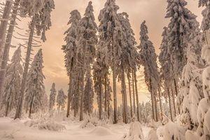 Бесплатные фото зима,лес,деревья,закат,пейзаж