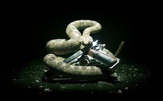 Бесплатные фото пистолет,ствол,курок,рукоять,змея гремучая