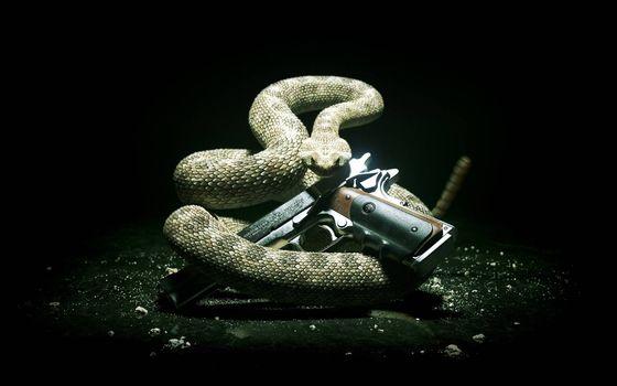 Photo free trigger, rattlesnake, hilt