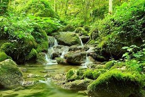 Бесплатные фото лес,деревья,камни,водопад,природа
