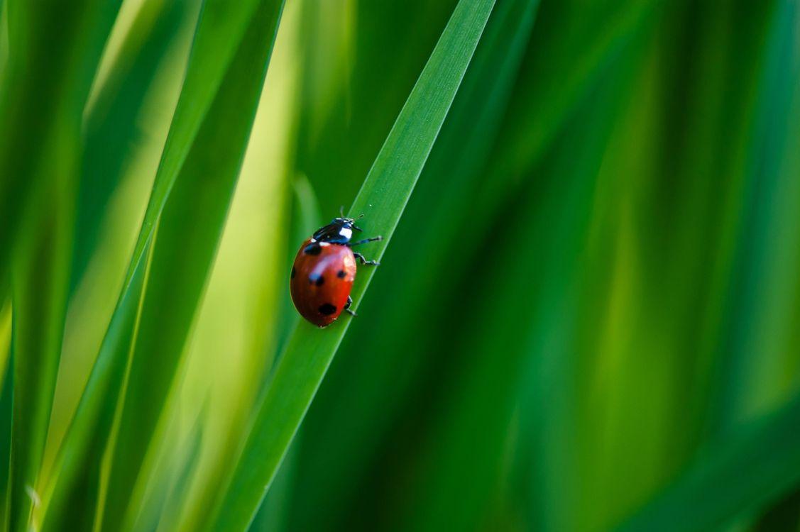 Фото бесплатно трава, божья коровка, макро, насекомые - скачать на рабочий стол