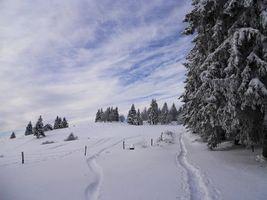 Заставки зима, дорожка, деревья
