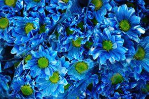 Фото бесплатно букет ромашковых хризантем, хризантемы, цветы