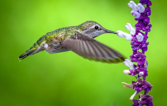 Фото бесплатно полёт, цветок, семейство мелких птиц