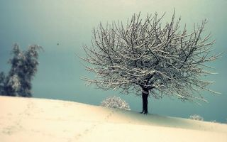Фото бесплатно зима, снег, сугробы, дерево, небо