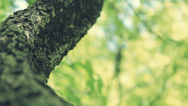 Заставки дерево, кора, листья