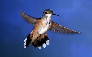 Photo free hummingbird, flight, wings