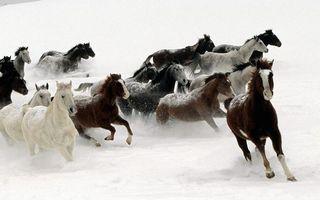 Заставки кони, лошади, табун, зима, снег, сугробы