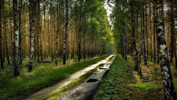 Фото бесплатно сырая погода, пейзажи, пейзаж