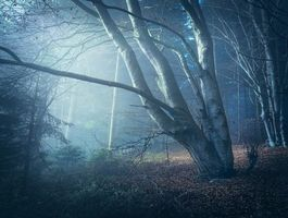 Photo free forest, trees, moonlight