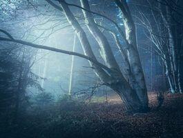Фото бесплатно лес, деревья, лунный свет, туман, природа