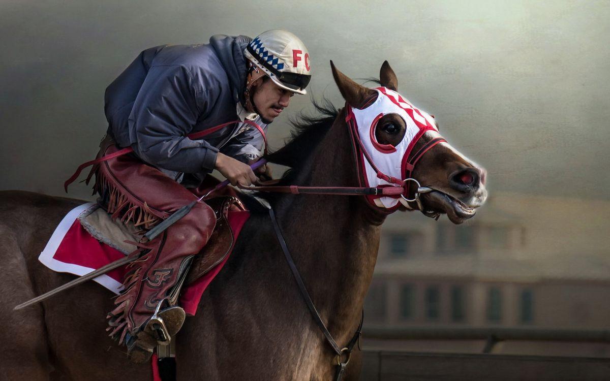 Фото бесплатно скачки, конь, лошадь, жокей, шлем, куртка, штаны, спорт