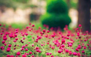 Заставки цветы, поляна, трава