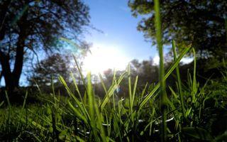 Заставки трава, роса, солнце