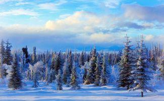 Фото бесплатно Елки, зима, лес