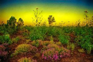 Monsoon Poem, Show Low, Arizona, закат, поле