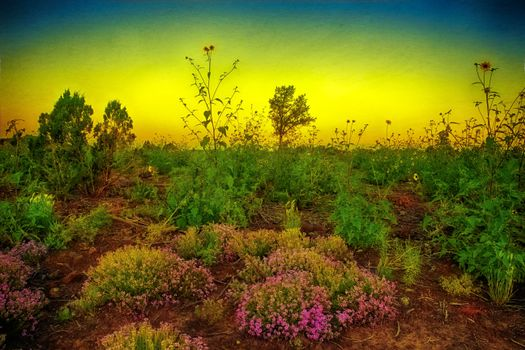 Photo free Monsoon Poem, Show Low, Arizona