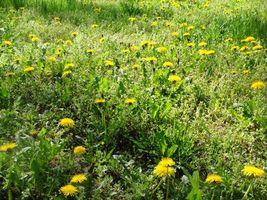 Бесплатные фото поляна,луг,трава,зеленая,одуванчики,желтые