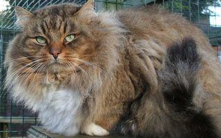 Бесплатные фото клетка,кот,пушистый,морда,глаза,зеленые,хвост