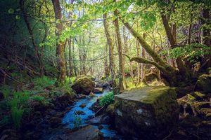 Бесплатные фото лес,деревья,речка,ручей,камни,пейзаж
