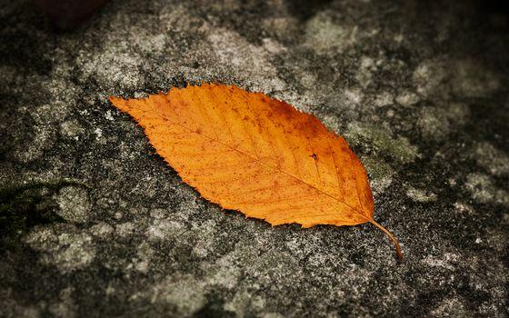Фото бесплатно поверхность, лист, желтый