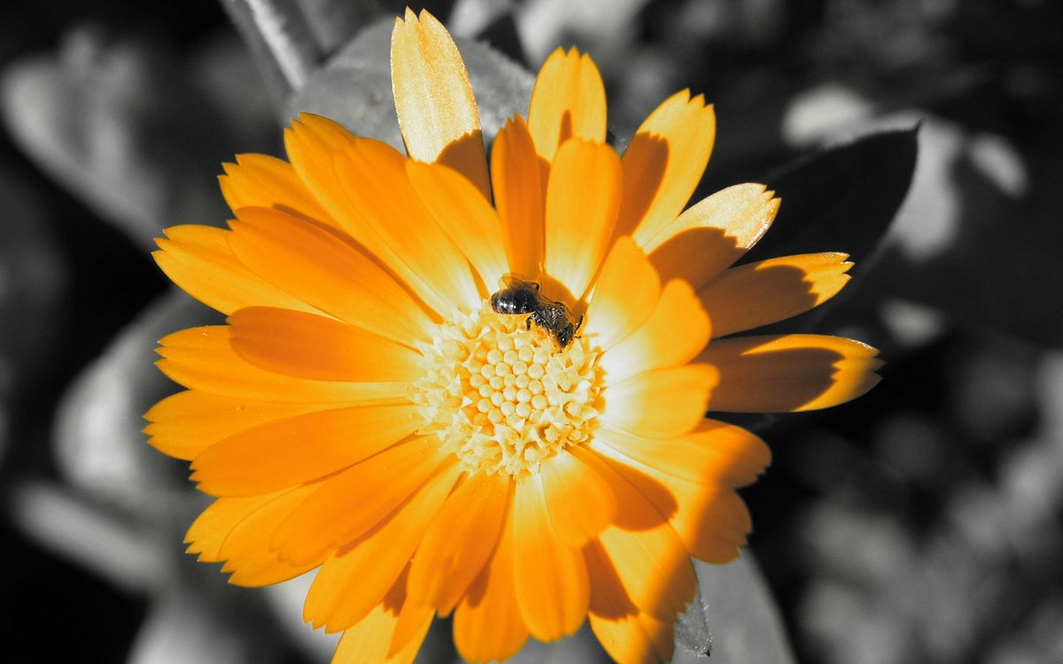 Фото бесплатно лапы, крылья, тычинки - на рабочий стол