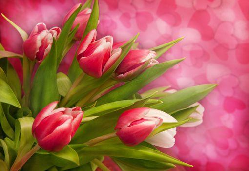 Photo free tulips, flowers, flora