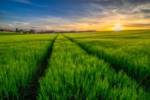Бесплатные фото закат,поле,колосья,деревья,небо,природа,пейзаж