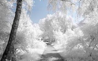 Бесплатные фото зима,деревья,трава,иней,тропинка,дорожка