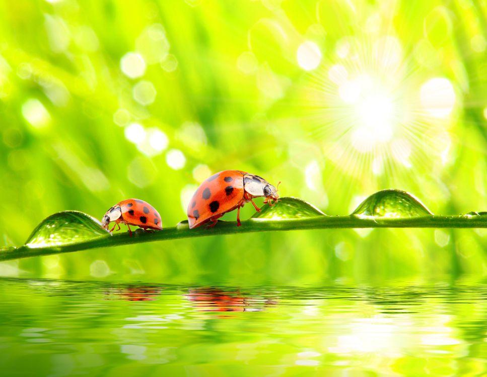 Фото бесплатно жук, насекомые, капли - на рабочий стол