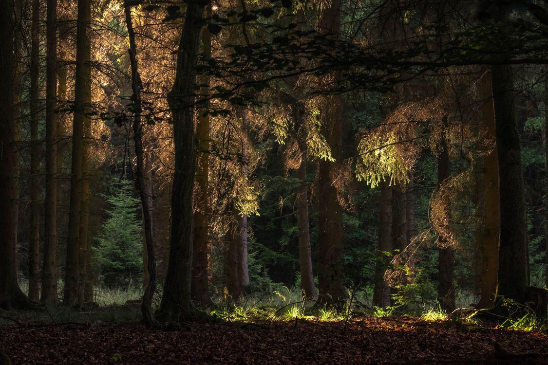 Фото бесплатно Лес, деревья, природа, листья, природа