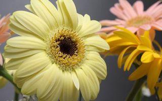 Бесплатные фото цветочки, лепестки, желтые, розовые, пестики, тычинки, стебли
