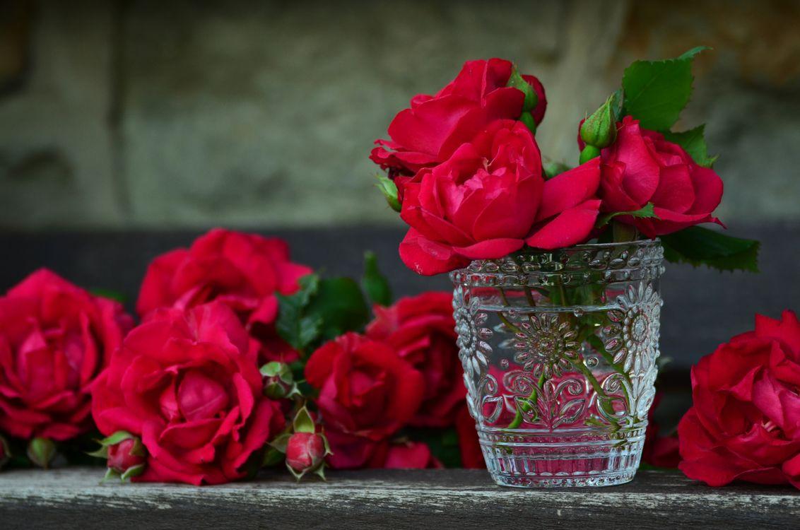 Фото бесплатно розы, цветы, флора - на рабочий стол