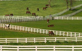 Заставки загоны, заборы, лошади, кони, пасутся, трава