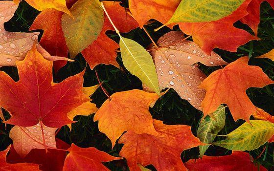 Фото бесплатно листья, цветные, прожилки