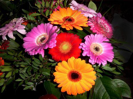 Бесплатные фото цветы,букет,флора