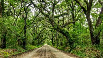 Фото бесплатно Чарльстон, Южная Каролина, Живые Деревья дуба
