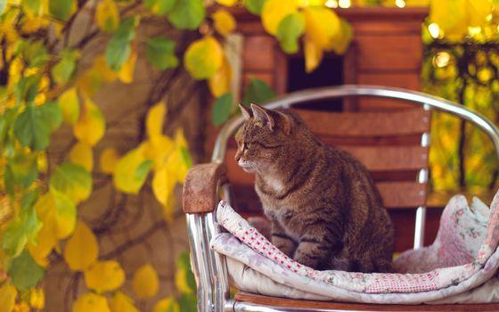 Бесплатные фото кот,морда,лапы,шерсть,стул,подстилка,листва