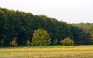 Заставки лето, поле, трава, деревья, лес, небо