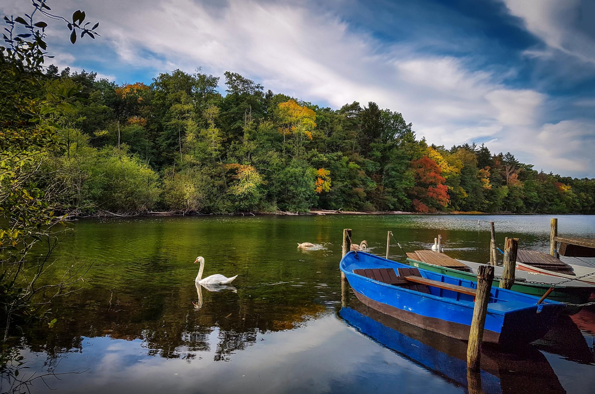 обои река, осень, лодки, лебеди картинки фото