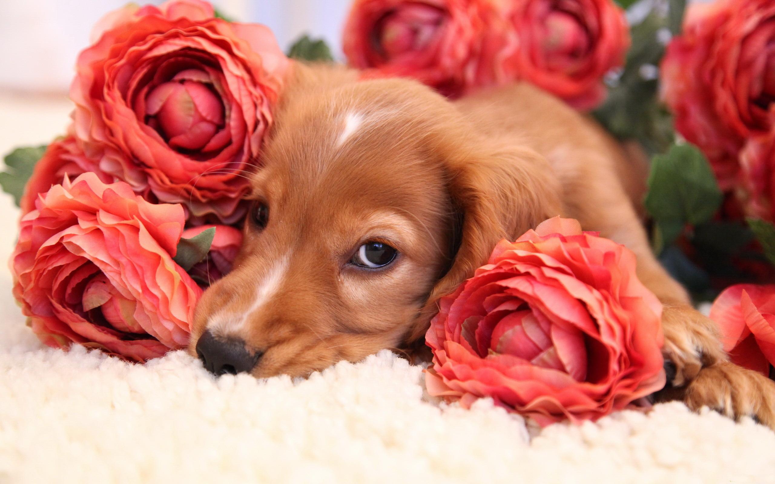 Фото щенки и цветы