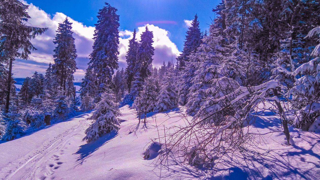 Фото бесплатно зима, снег, сугробы, деревья, пейзаж, пейзажи