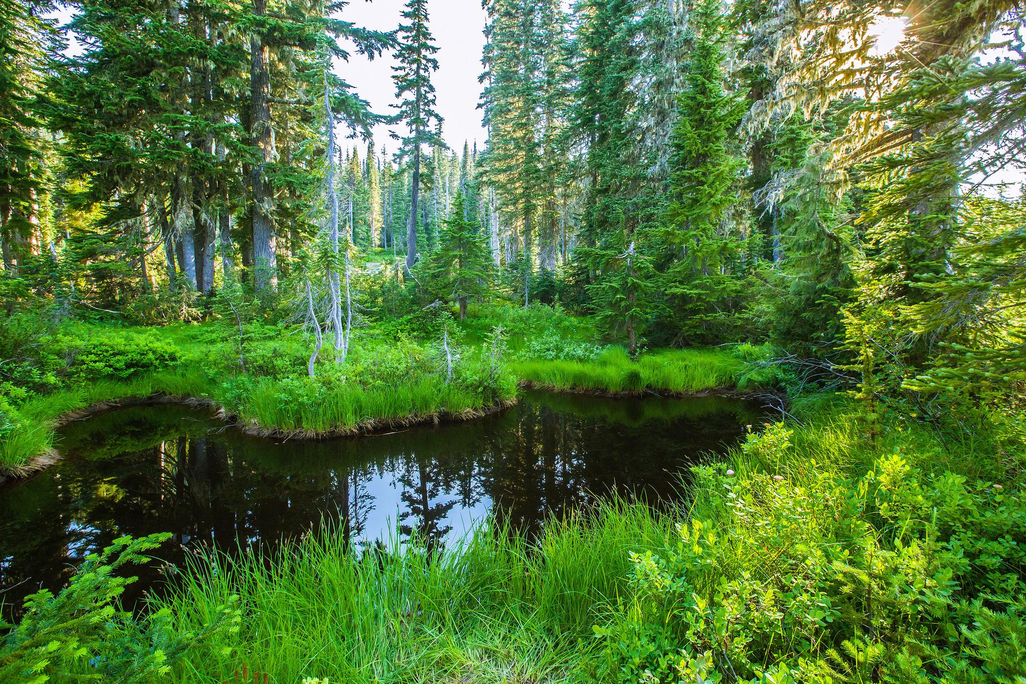 лес, водоём, деревья