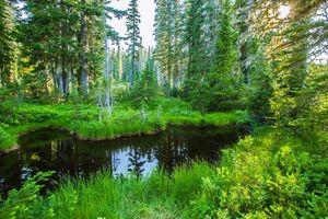 Бесплатные фото лес,водоём,деревья,природа