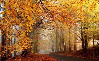Photo free autumn, road, foliage