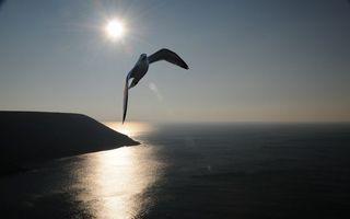 Бесплатные фото чайка,клюв,крылья,полет,небо,солнце,море