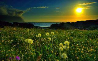 Фото бесплатно закат, поляна, трава, одуванчики