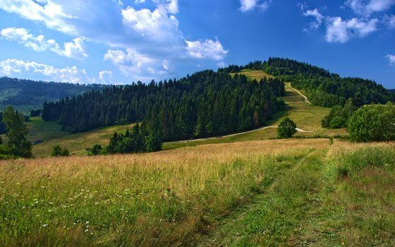 Фото бесплатно горы, трава, дорога