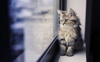 Бесплатные фото Окно,котенок,пушистый,животные,маленький,полосатый