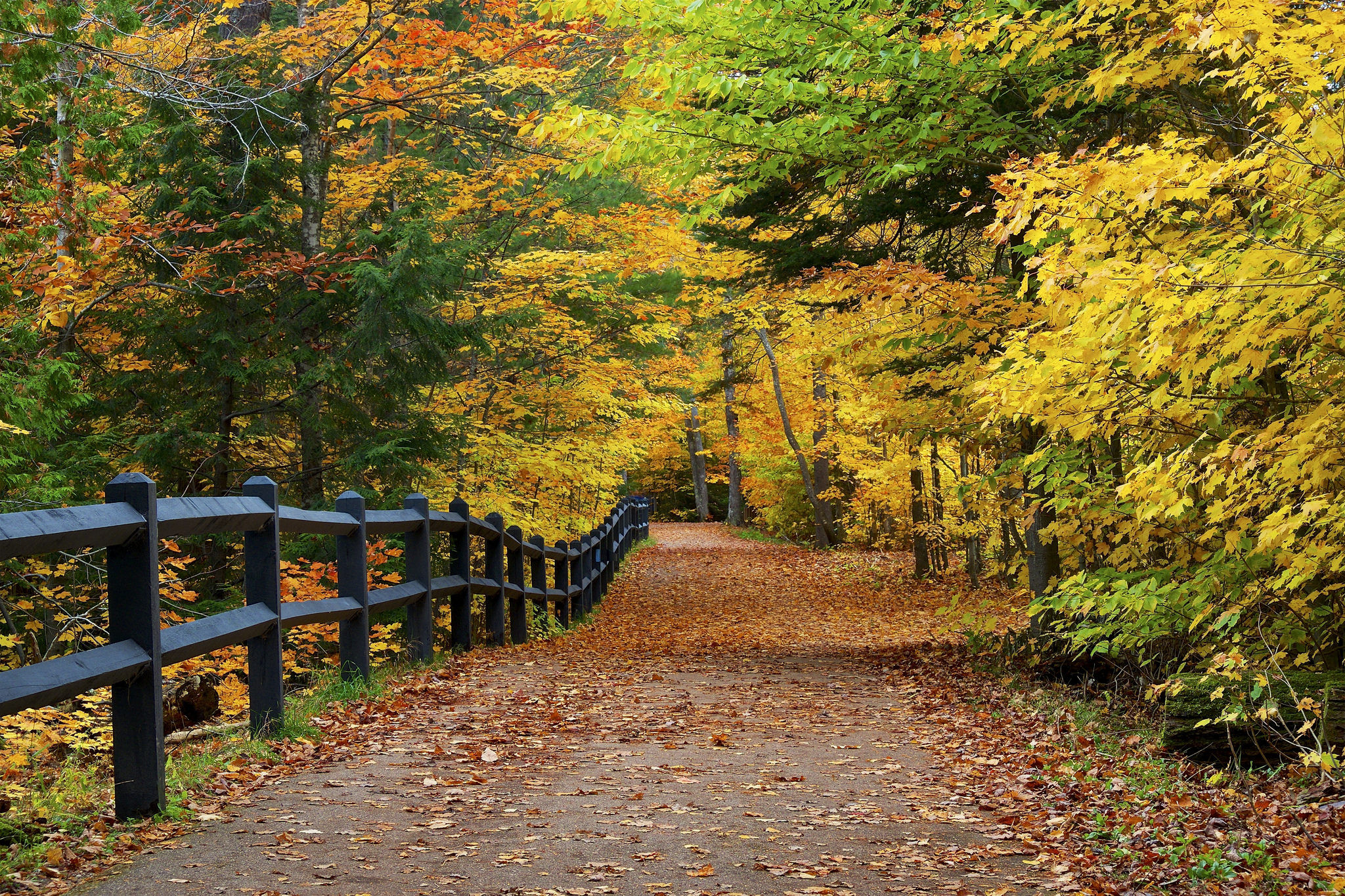 обои осень, лес, дорога, деревья картинки фото